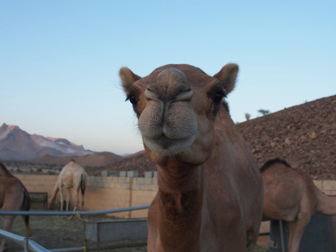 Buźka! | Oman