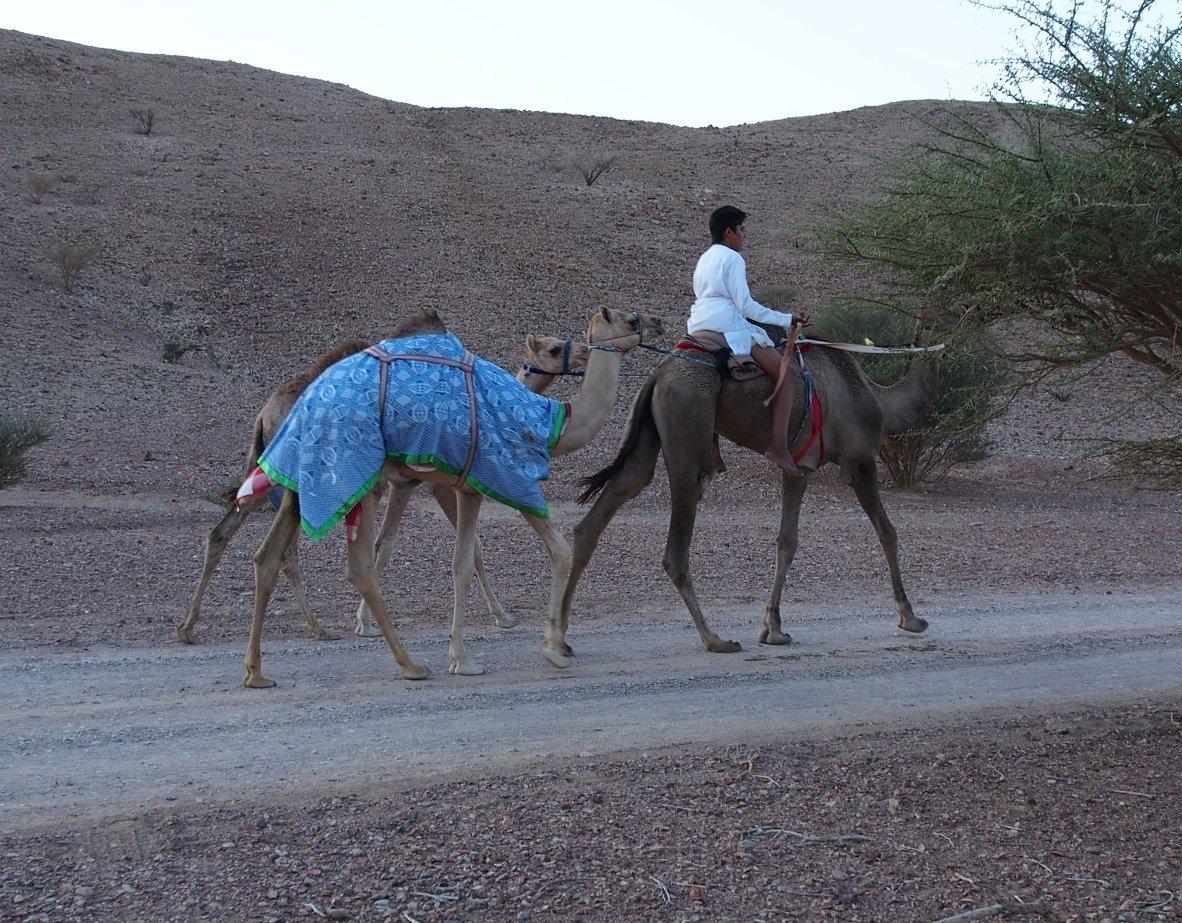 4 kółka w Omanie