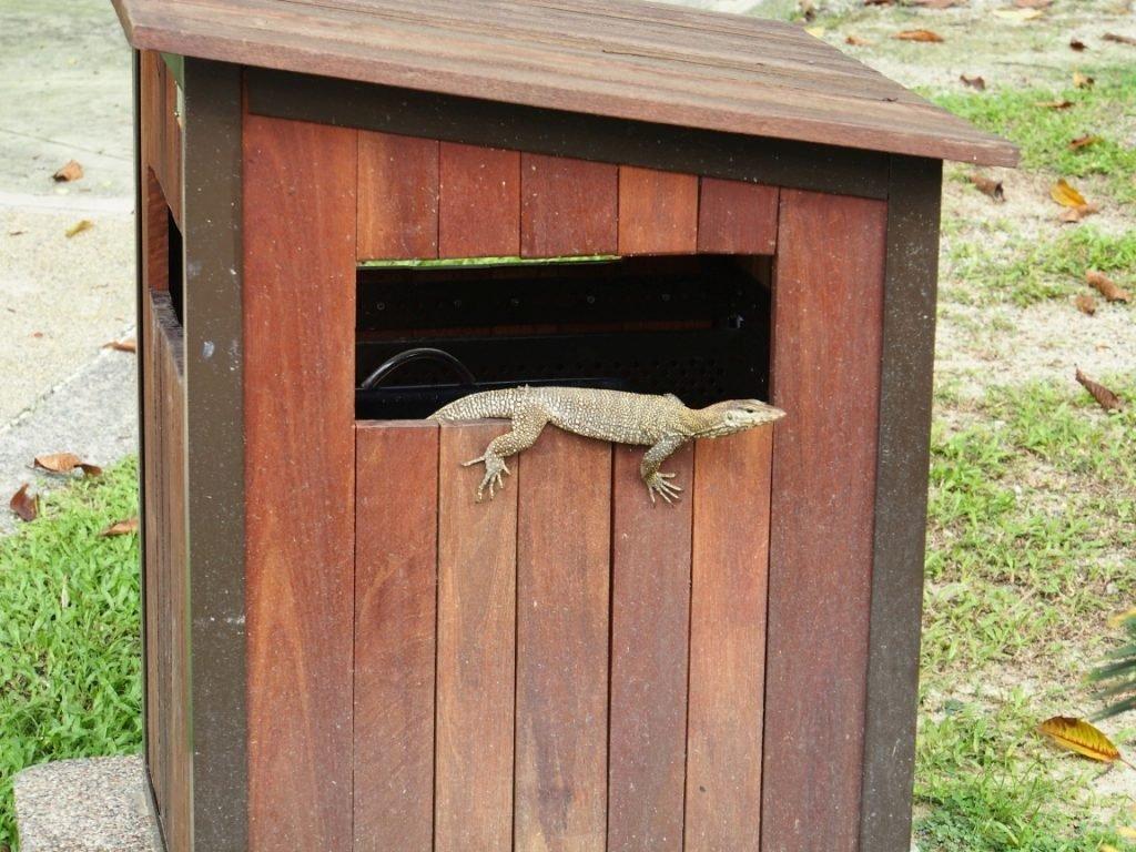 Sympatyczny gekon | Malezja
