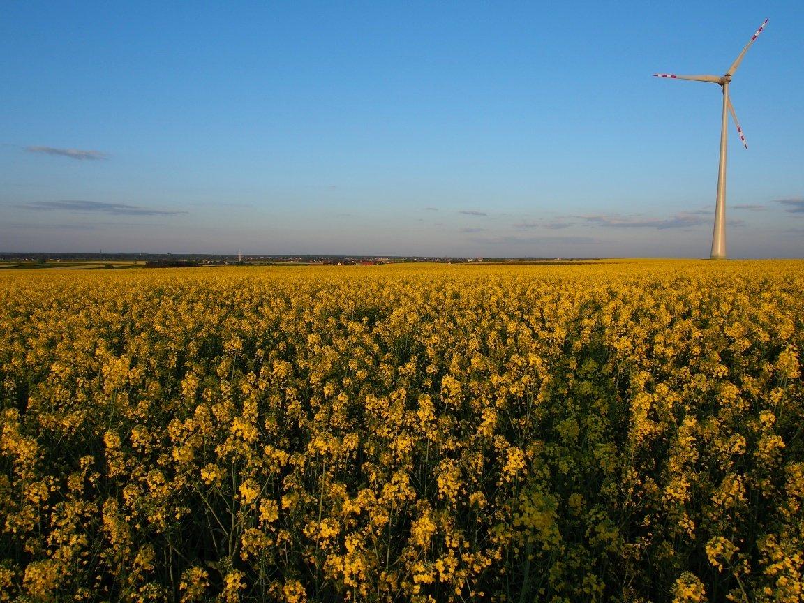 Bardziej żółto niż zielono | Gdzieś w PL